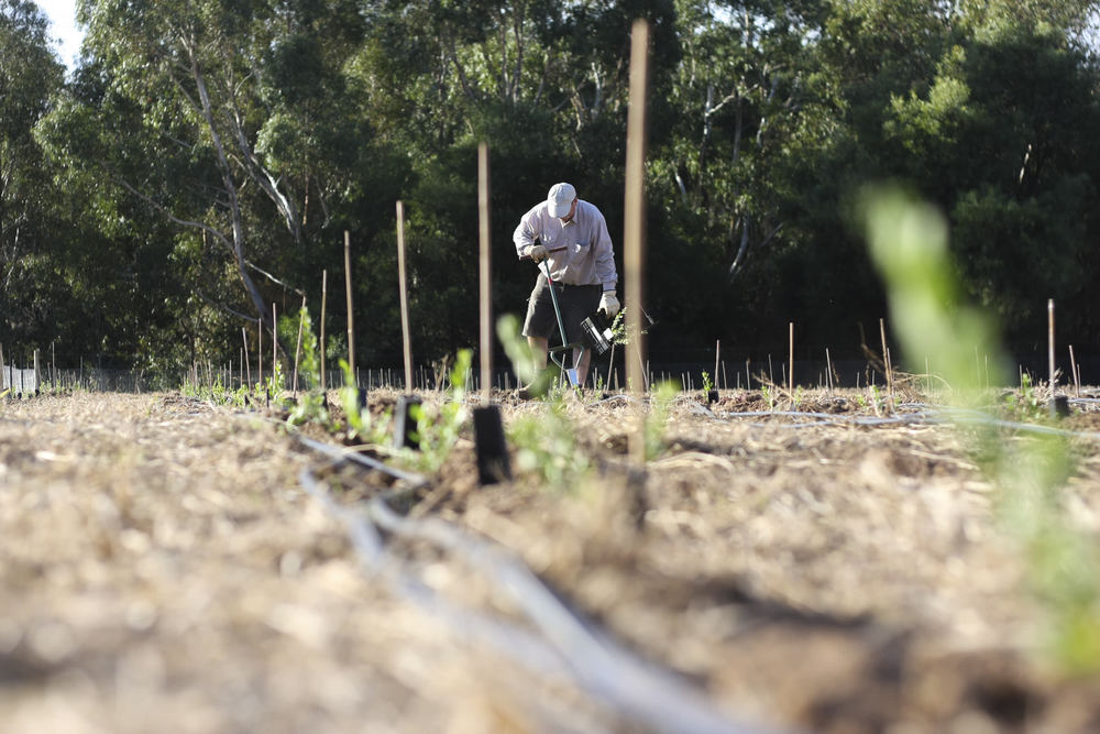 Planting at the Mt Torrens site