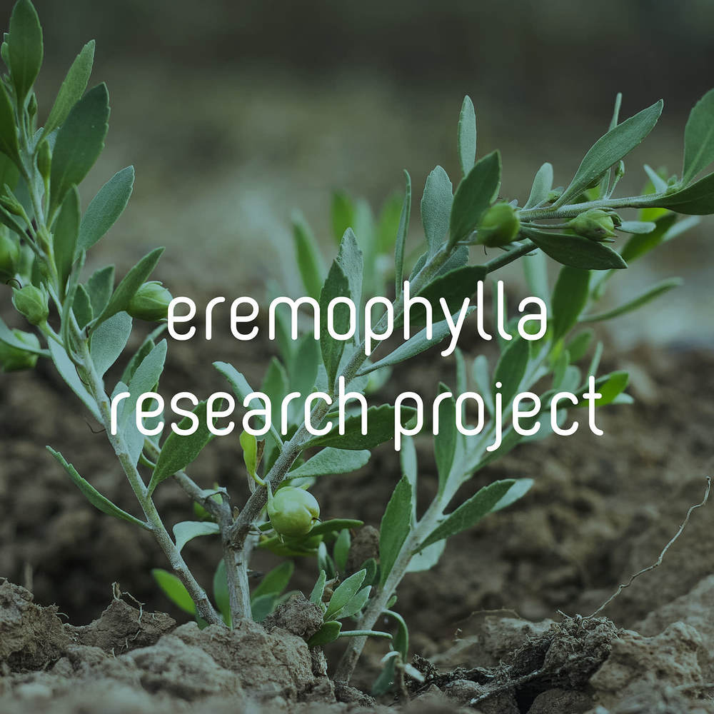 eremophylla.jpg