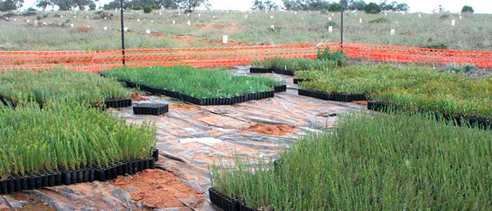 noora-seedlings-700x300.jpg