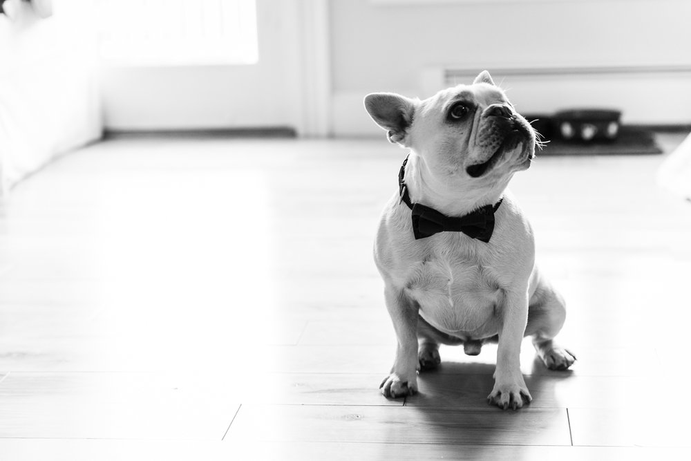 turner-hill-wedding-photography-french-bulldog