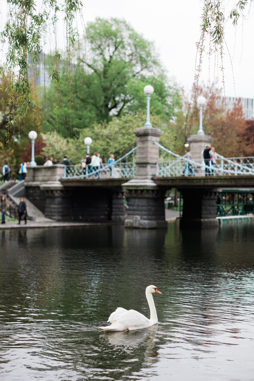 boston common wedding photography swan