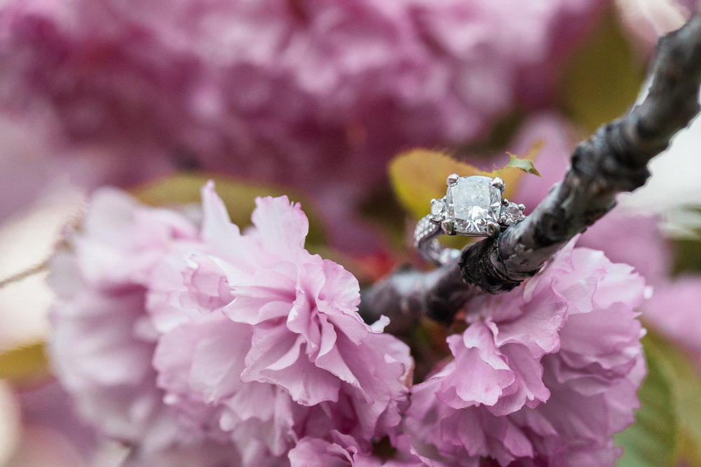 boston garden cherry blossom engagement session ring
