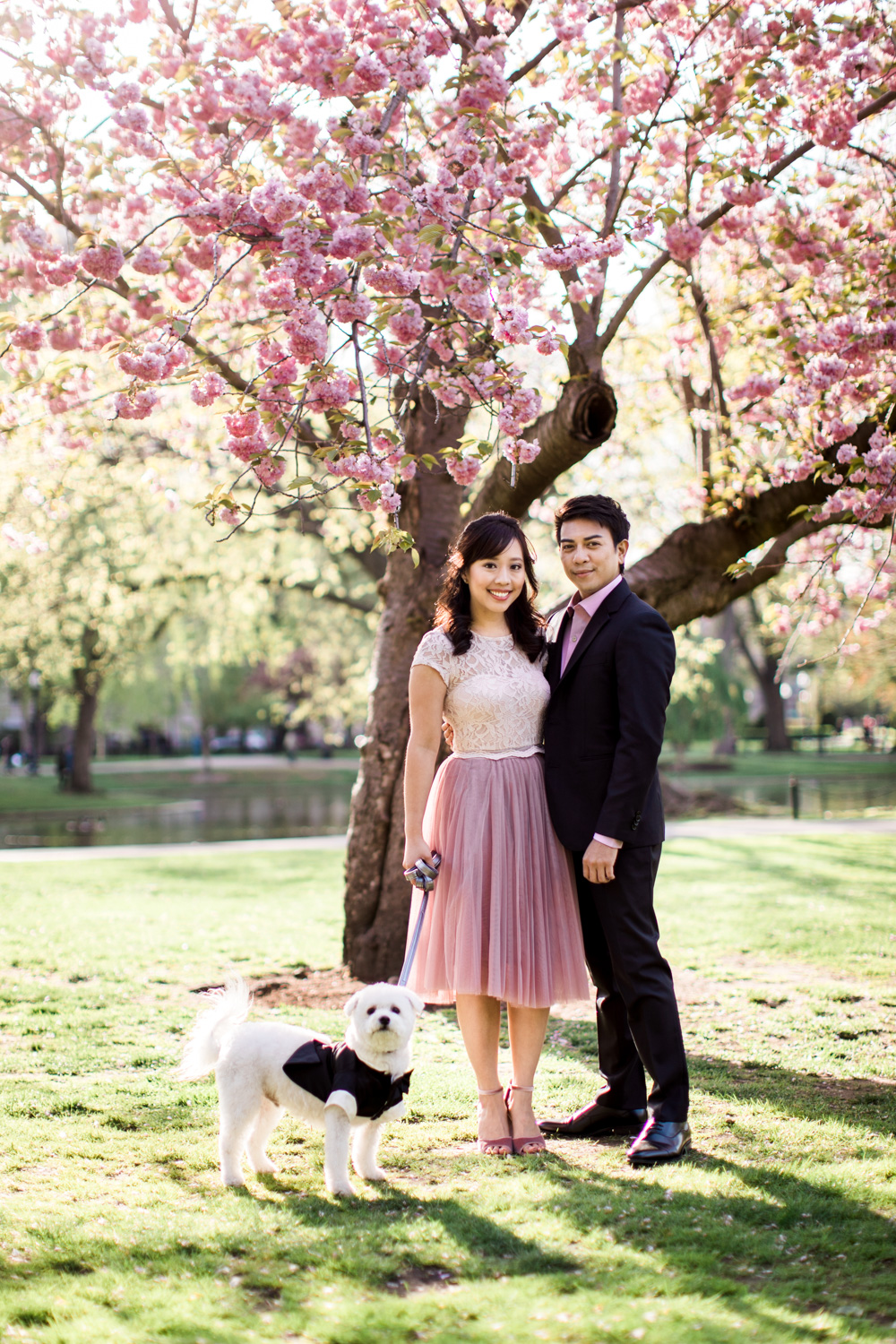 boston common gardens engagement session cherry blossoms
