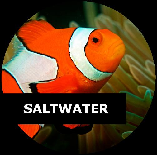 Fish laboratory for Community saltwater fish