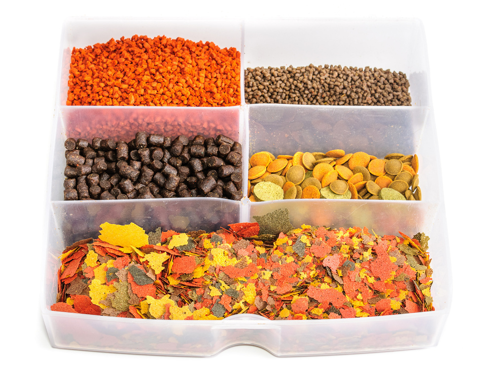 types of fish feed fish laboratory