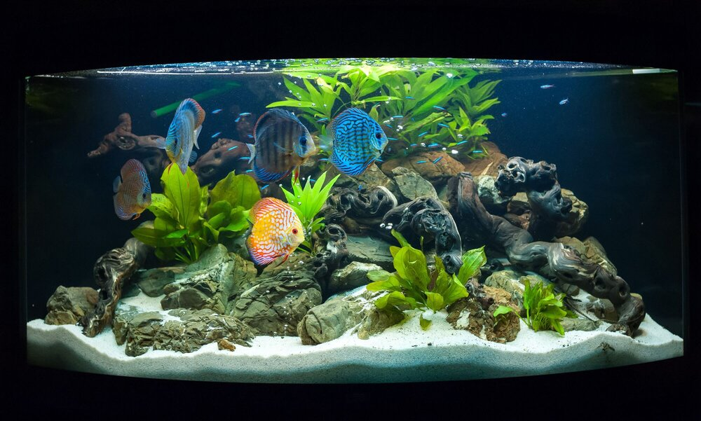 How to set up a freshwater aquarium step by step fish for How to set up fish tank