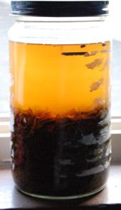 Jasmine brew in recycled jar