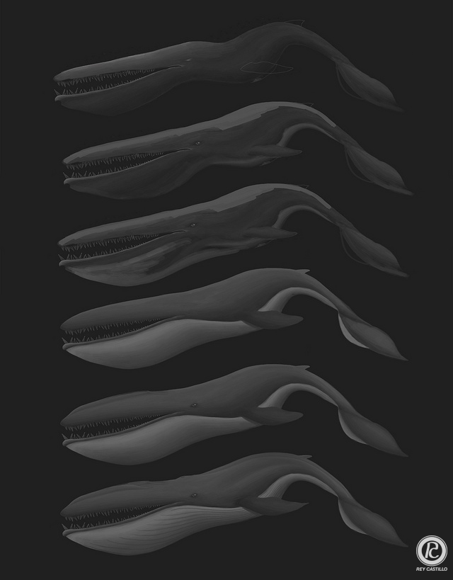 Siren Whale Stages