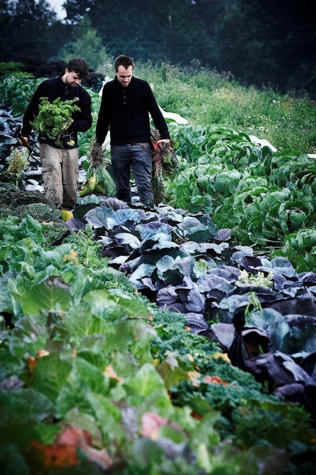 Harvest I pejper