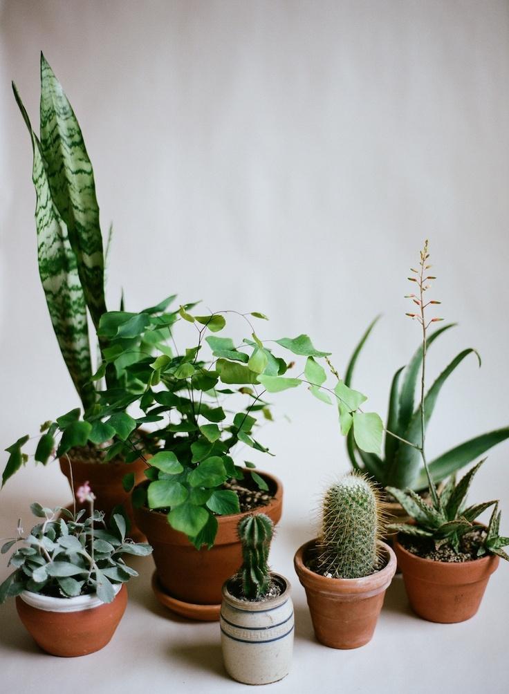 Plants I pejper