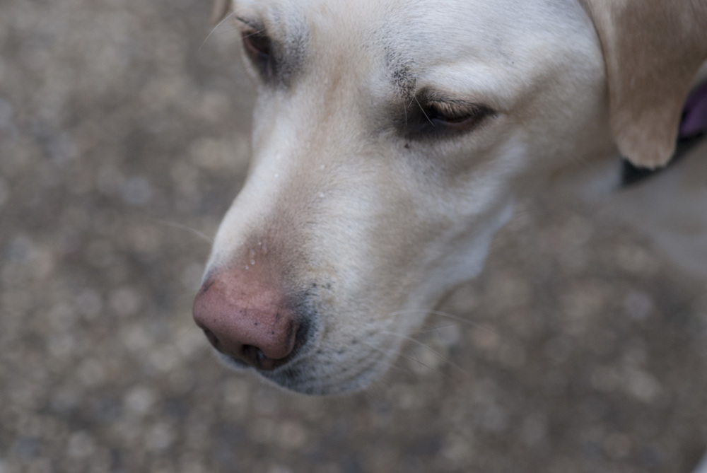My Dog Peyton