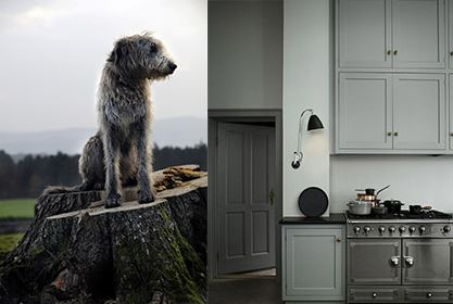 Wolfhound and color via Farrow and Ball