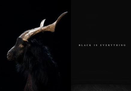 Black Goat.JPG