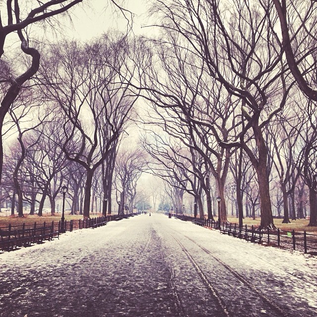 Snowy walk to work today through Central Park