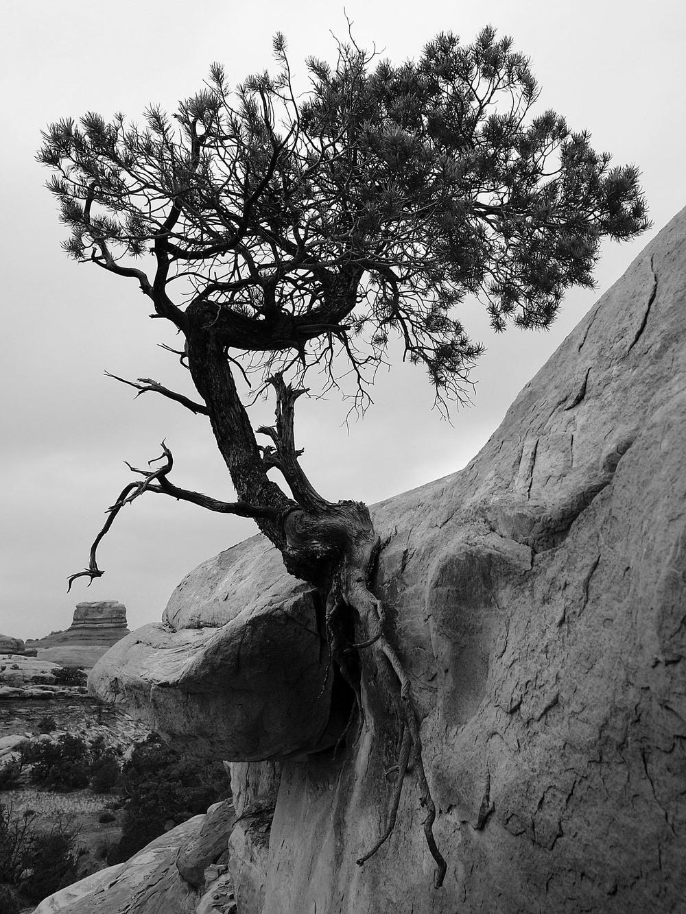 canyonlandspine.jpg