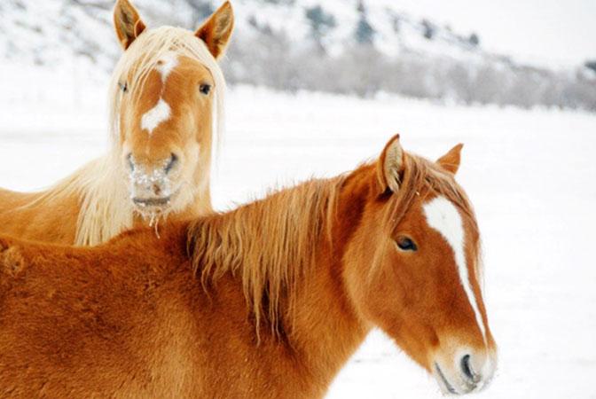 hp-horses.jpg