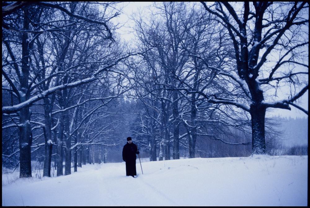 valaam_trees.jpg