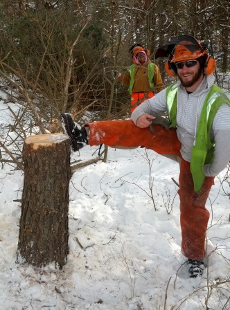 My first (big) felled tree during chainsaw training  .jpg