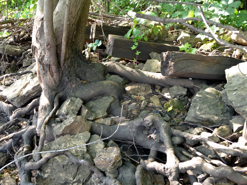 roots & rocks.jpg