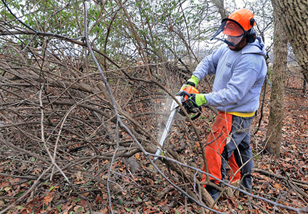 Crew Member Dewitt Boyd cut brush at the Dayton Bluffs Preserve near Ottawa, Illinois. Photo by Tom Sistak, mywebtimes.com
