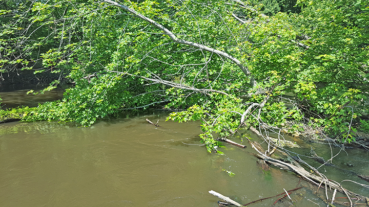 A snag on the South Fork of the Crow River; see below for the cleared waterway.