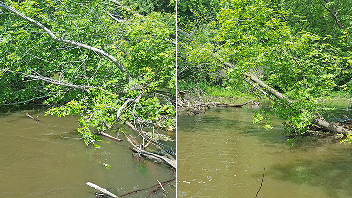 Before and after the Water Trails crew cleared a snag from the Crow River.