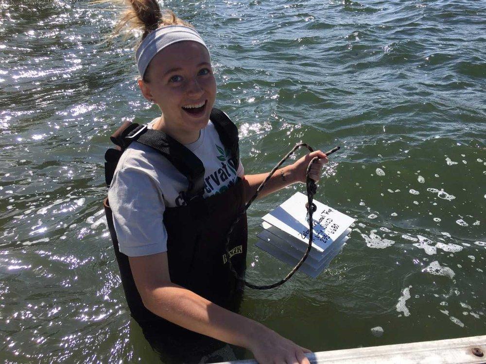 Placing a zebra mussel trap under a local dock