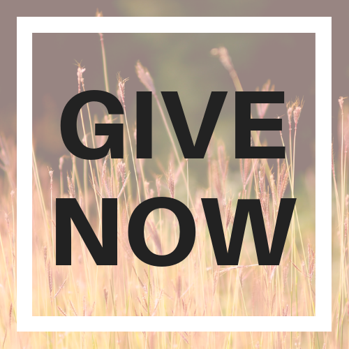 Give Now Website Button (1).png