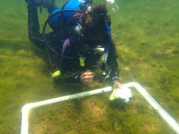 When the water temperatures rose, the SCUBA gear came out. Dive surveys for zebra mussels started early and continued through the entire field season.