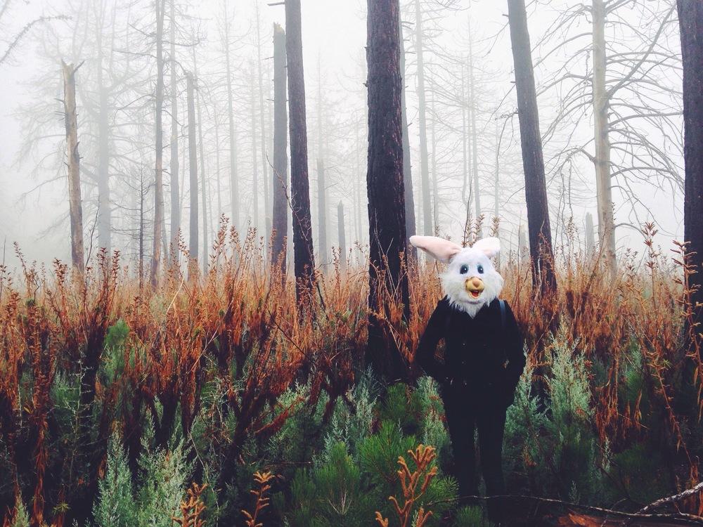 bunny suit.jpg