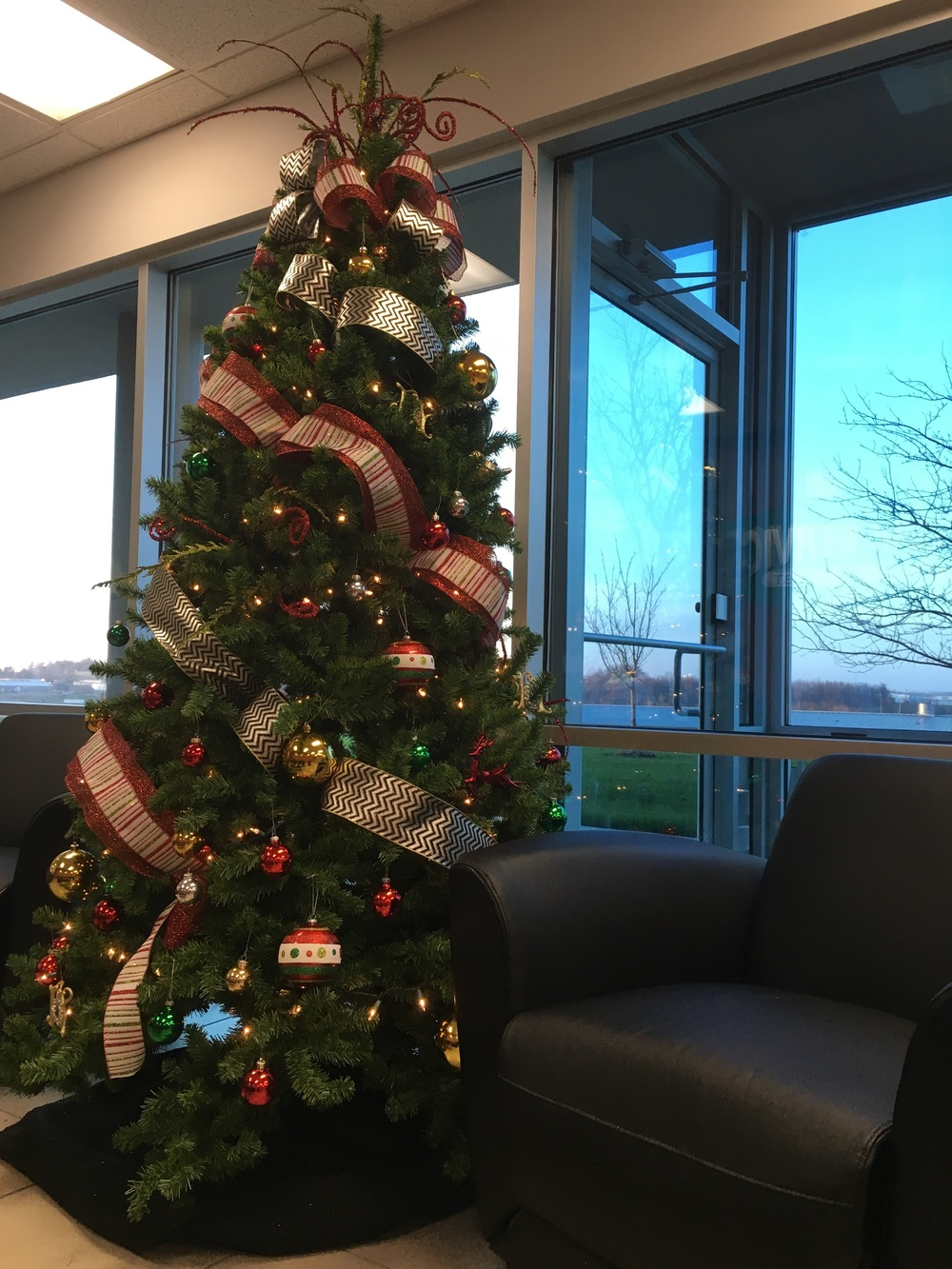 Tree at Plaza Tire Headquarters.