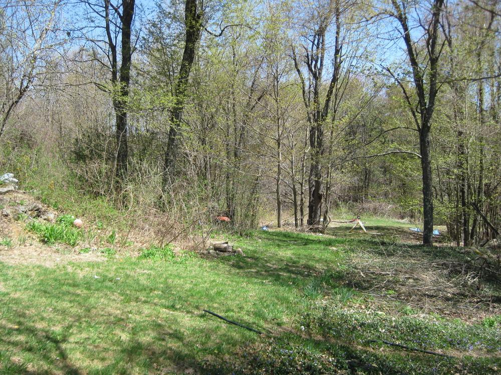 Backyard IMG_4407.JPG