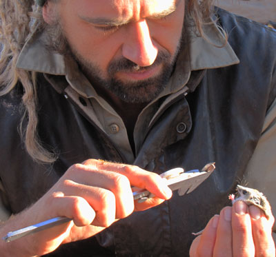 Ecologist Dr Max Tischler collects measurements, 2010.