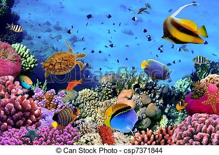 can-stock-photo_csp7371844.jpg