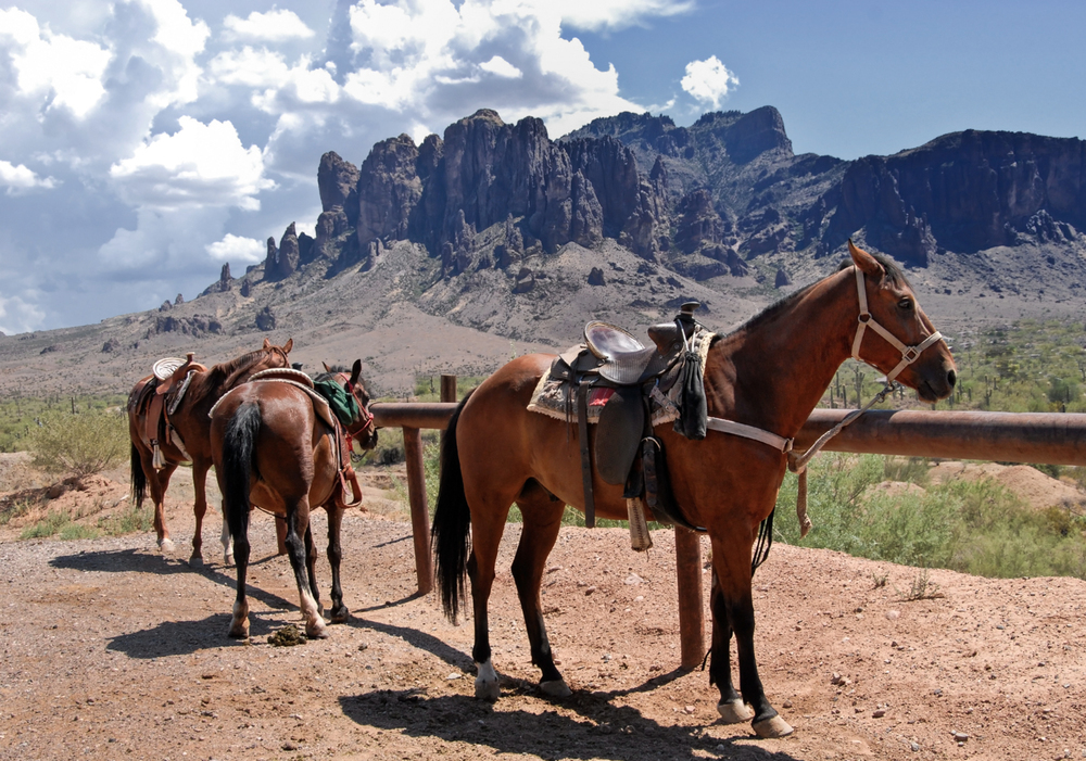 Common Sense Saddle Fitting Farmranchstore Com Farm