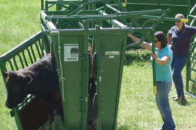 Side Exit - All our standard chutes carry this important feature. The ability to side exit a cow is paramount for animal safety. Preventing one animal injury will pay for the value of this feature. It is also helpful for practical uses such as sorting.
