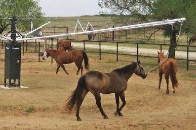 Horse Walkers -