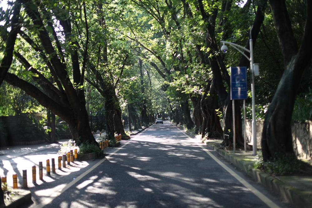 Near Litchi Park, Shenzhen