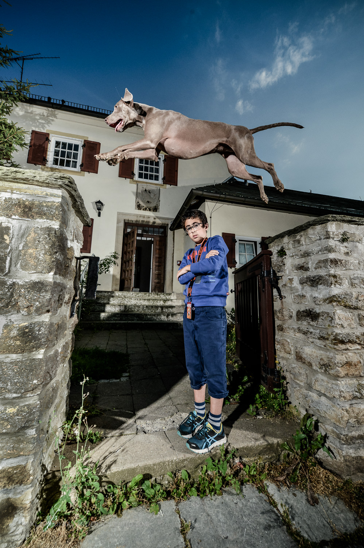 tdp-street dog agility-2.jpg