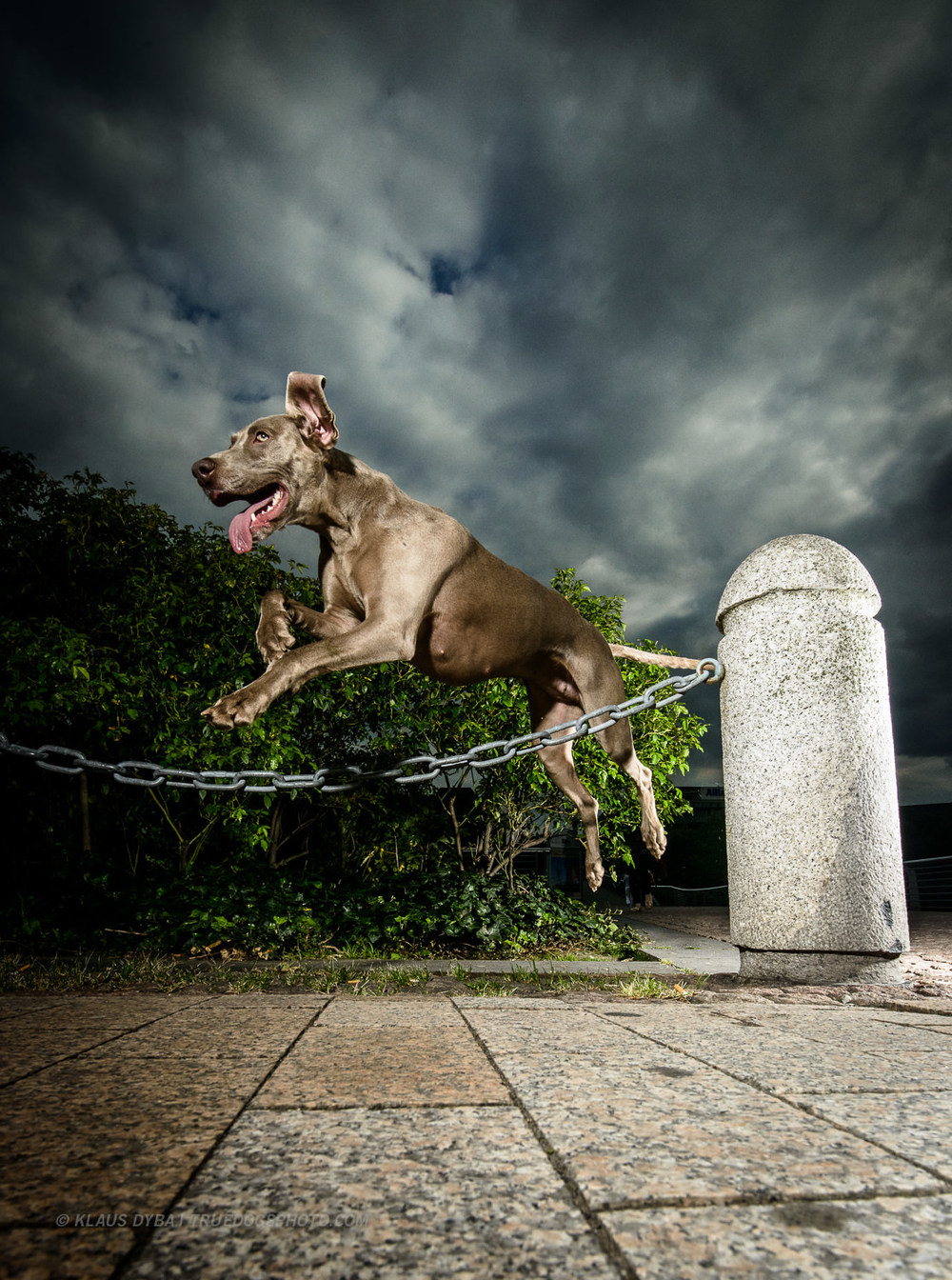 tdp-street dog agility-3.jpg