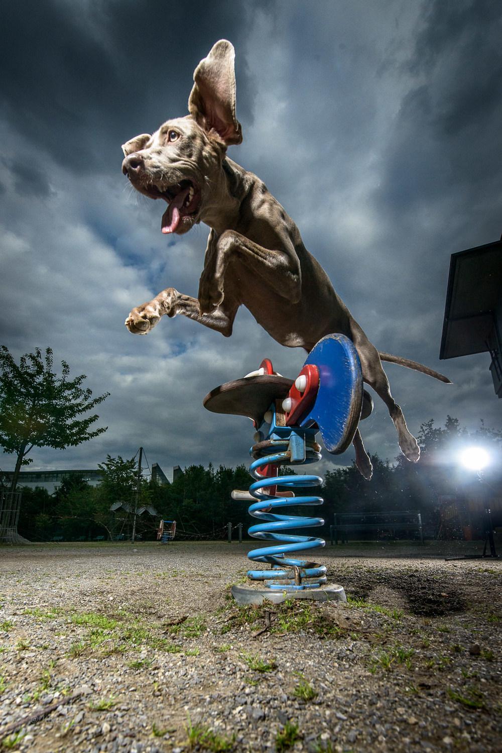 tdp-street dog agility-4.jpg