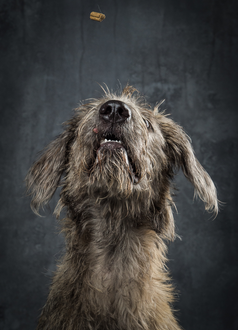 wolfhound-dog-portrait-photography-klaus-dyba