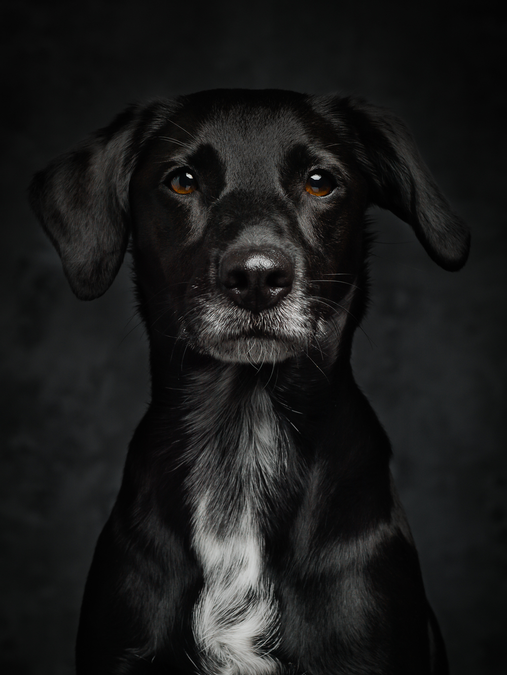klaus-dyba-dog-photography