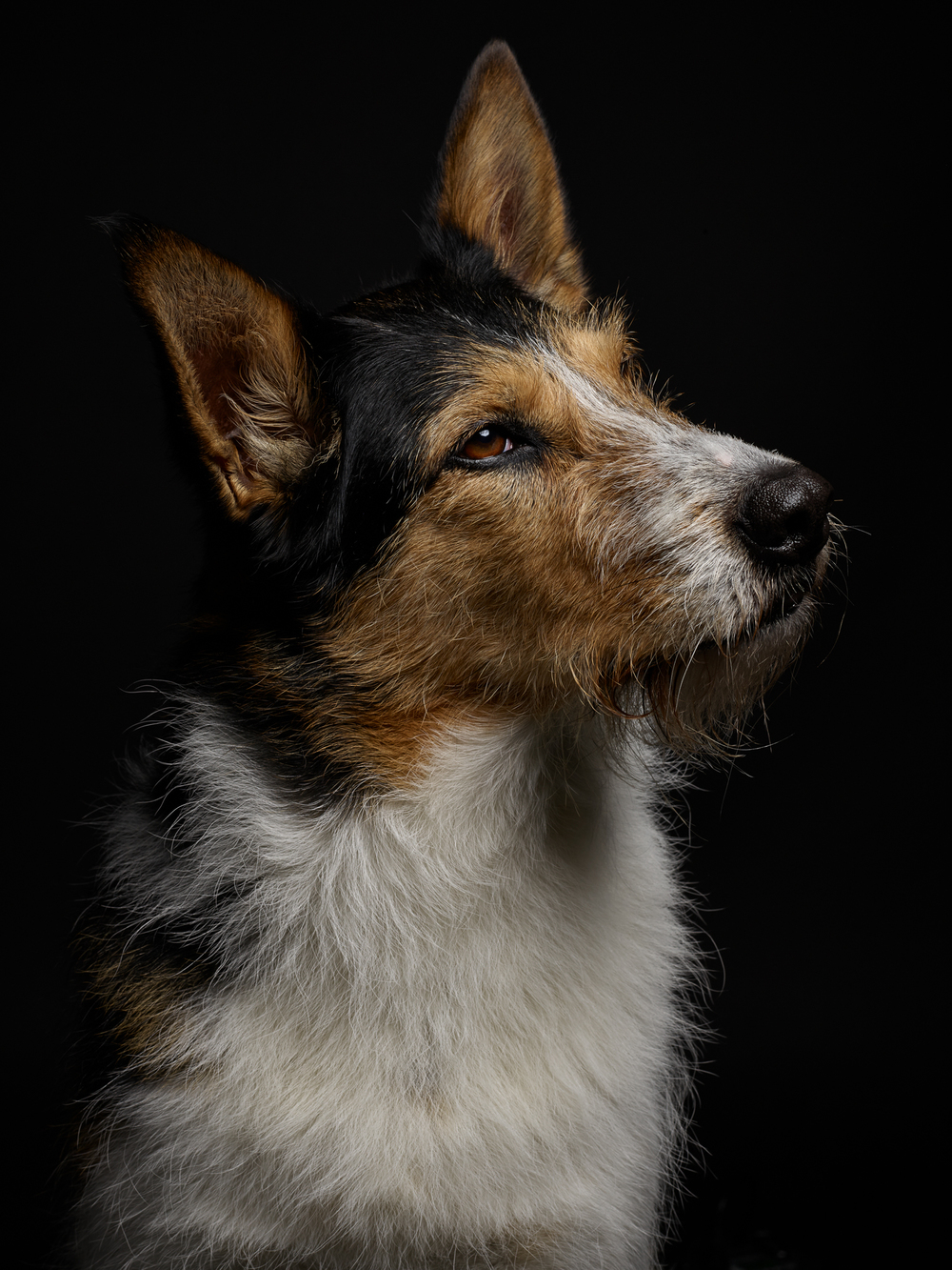 klaus-dyba-dog-photography-
