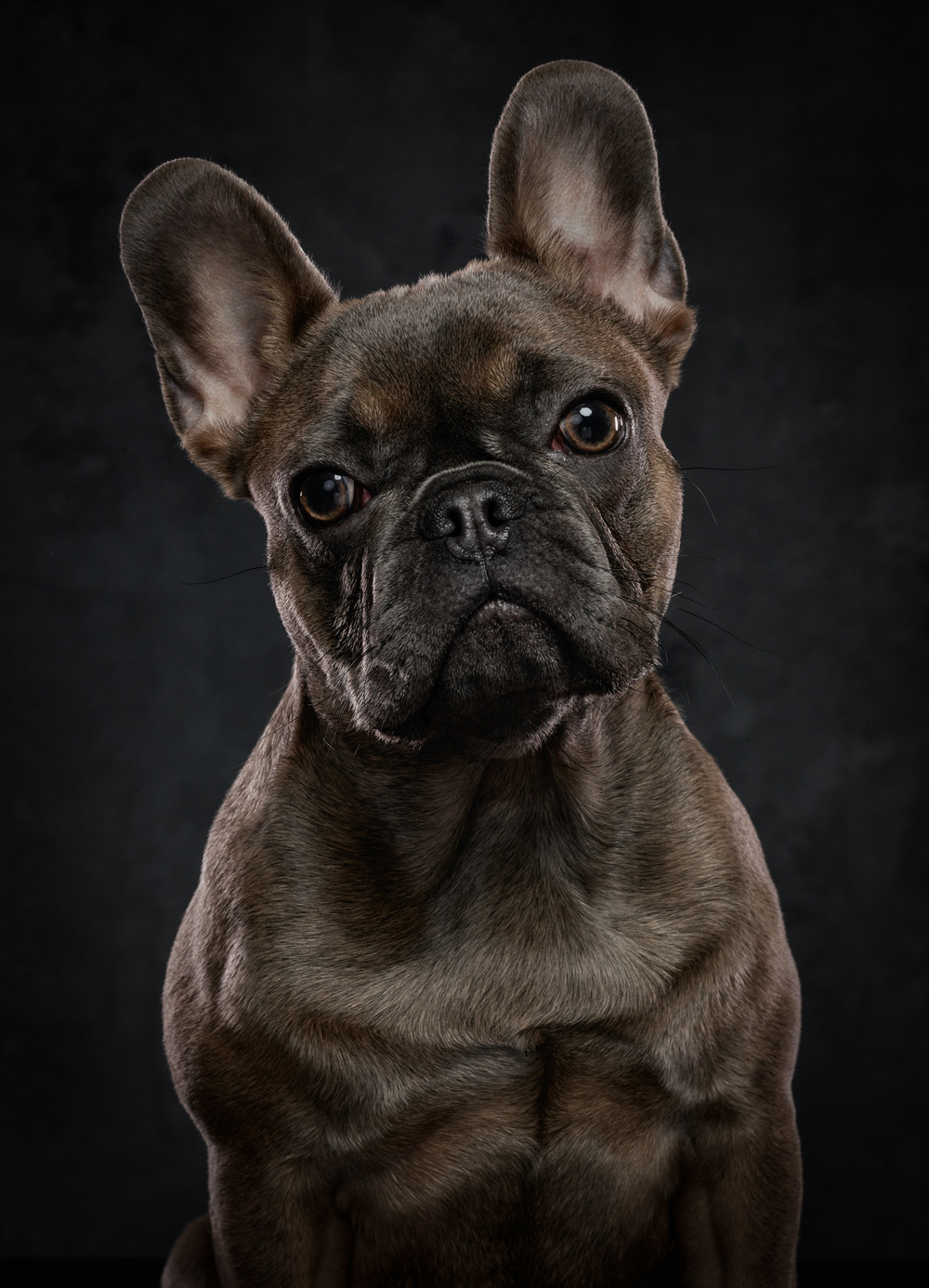 dog-photography-klaus-dyba-1.jpg