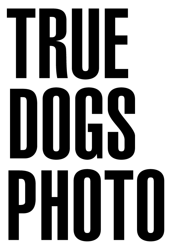 True Dogs Photo