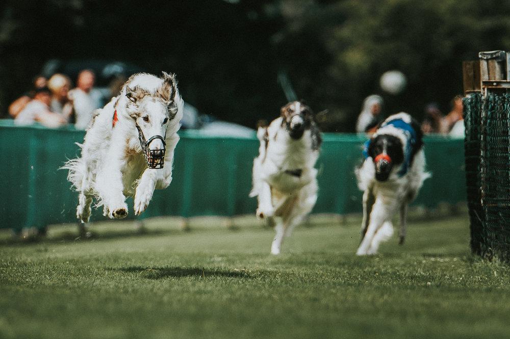 klaus-dyba-hunderennen-dograce-6.jpg