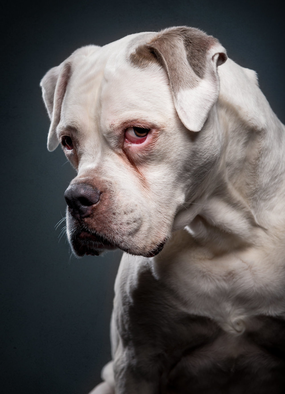 studio-dogs-klausdyba-14.jpg