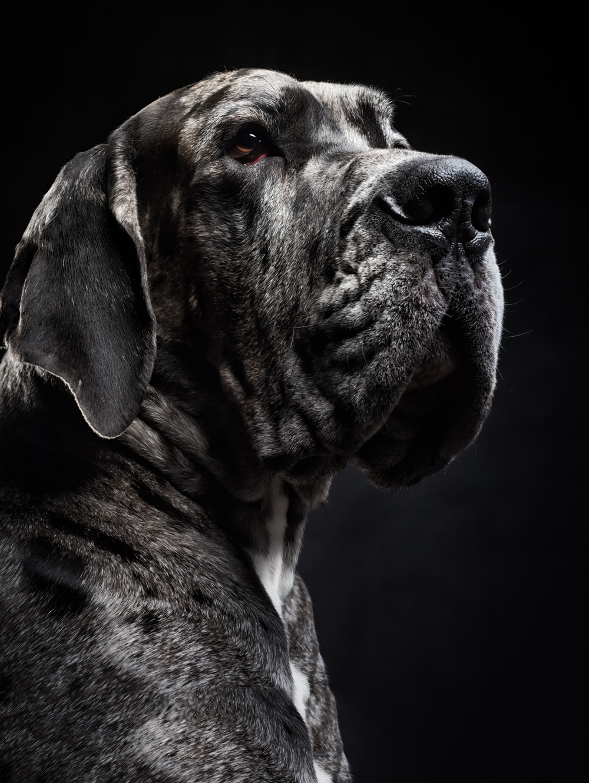 studio-dogs-klausdyba-7.jpg