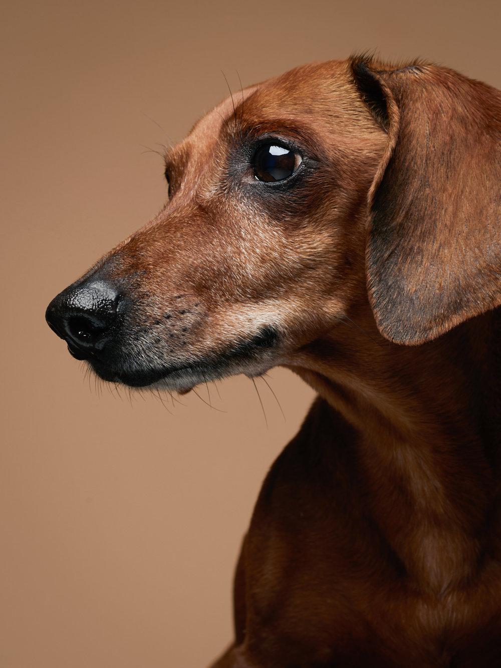 studio-dogs-klausdyba-53.jpg